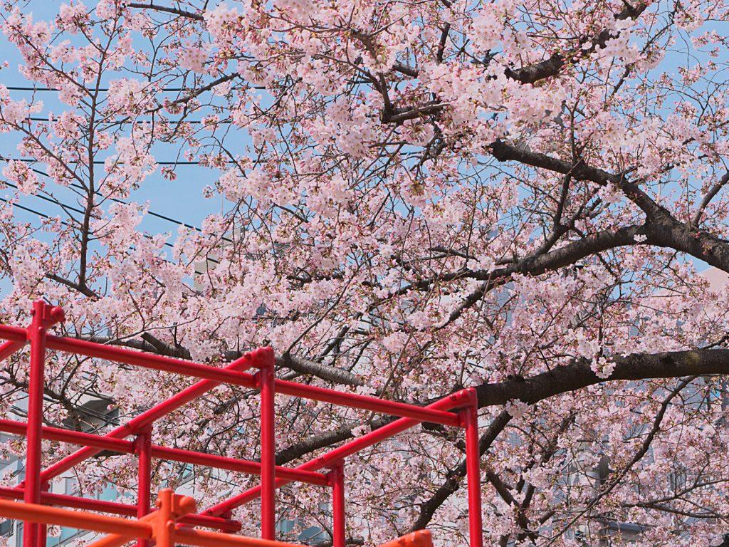 桜も咲き始めてはいますが、先週に続き寒い寒いバドミントン。。